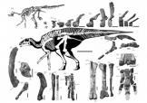 日发现其境内最大恐龙化石
