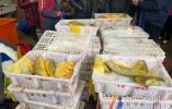 價值近百萬的野生大黃魚入境啦!2斤出頭的近2000元一條