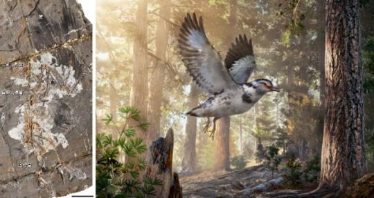 Chinese scientists discover that primitive birds could