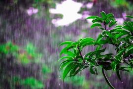 盛夏的小山上,如雨起时