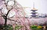 武汉解封一周年 在武汉温商、温籍大学生及在温的武汉人谈感受