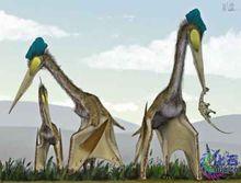 撒哈拉沙漠动物