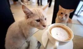 猫咪经济学