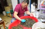 比水果还便宜!杭州河虾特价 有吃货已经连吃4天了