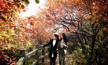 Red Leaf Festival opens in Jinhai Lake scenic area