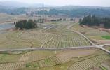 重点整治566个田块!2021年温州市田园整治工作方案公布