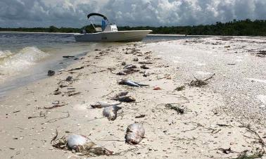 Scientists seek new ways to combat Florida's growing 'red tide'