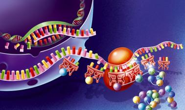 Scientists need more caution with gene drives
