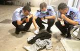 男子深夜倒地身亡,无目击证人、无事发监控,南京交警68小时抓获犯罪嫌疑人
