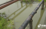 问政追踪丨11处黑臭水体治理慢 菏泽市长:立下军令状 不能让一滴污水进入湖里