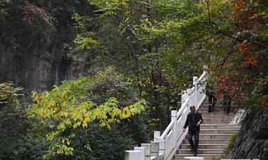 Autumn scenery of Xixiasong scenic area in China's Gansu