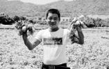 地产土豆退化