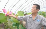 """视中人·浙人匠心⑦丨西湖园林""""百晓生""""张振羽:27年呵护一缕花香"""