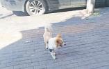 遛狗不牵绳 散养任犬跑 义乌街头小区犬只乱窜仍常见