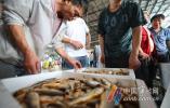 吃货们准备好!东海热气货8月2日起大批量上市
