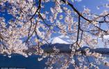 3月樱花季期待浪漫的日本赏樱游?得多掏钱了!