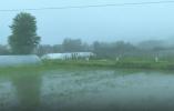 迎战梅汛:浙江连续降雨农作物受灾 各级积极自救减少损失