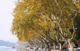 美得正当时 杭州十大赏秋打卡地走起
