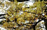 植树节寻古树丨在杭州美了千年的它们 你可曾见过