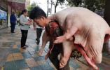 1米6男子扛起400多斤猪肉,靠双肩养活一家人,网友:敬佩每个努力生活的人!