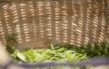 玉环文旅助节推茶叶产业转型升级